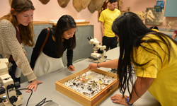 SDSU Science and Engineering Sampler, students looking at butterflies